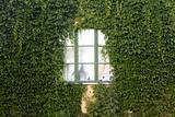 An Ivy Covered Window in Sigtuna, Sweden Photographic Print by Jill Schneider
