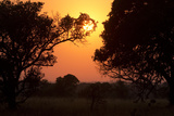An Orange Sunrise Appears Behind Backlit Trees in the Phinda Game Reserve Photographic Print by Steve Winter