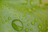 Macro Water Droplets on a Green Leaf Photographic Print by Erika Skogg