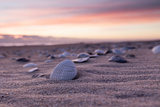 Shells Adorn the Sandly Shoreline of Pea Island National Wildlife Refuge Photographic Print by Robbie George