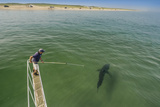 A Biologist Tries to Record Video of a Great White Shark Off Cape Cod Photographic Print by Brian Skerry