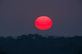 A Red Sun Rises over the Silhouetted Landscape of the Phinda Game Reserve Photographic Print by Steve Winter
