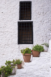 Potted Plants Line the White-Washed Stairways at the National Ethnographic Museum Fotografisk trykk av Krista Rossow