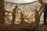 Fishermen Haul in Nets Filled with Sprats Along a Beach Cleared of Land Mines Photographic Print by Ami Vitale