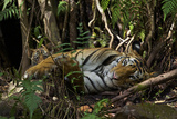 A Mother Rests with Her Two-Month-Old in Bandhavgarh National Park Photographic Print by Steve Winter