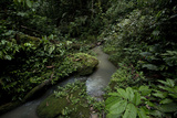 A Rainforest Stream in Yausuni National Park Photographic Print by Steve Winter