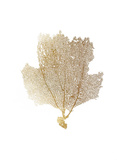 Gold Foil Sea Fan II Prints by  Vision Studio