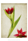 Parchment Flowers II Poster by Judy Stalus