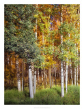 Aspen Glen I Posters by David Drost