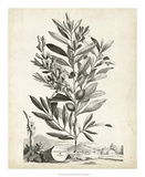 Scenic Botanical VI Giclee Print by Abraham Munting