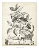Scenic Botanical III Giclee Print by Abraham Munting