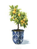 Fruit Tree I Giclee Print by Grace Popp