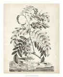 Scenic Botanical I Giclee Print by Abraham Munting