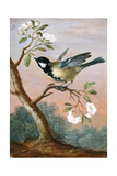 Great tit on a branch of a fruit tree Giclee Print by Barbara Regina Dietzsch