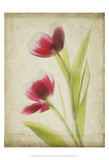 Parchment Flowers III Prints by Judy Stalus