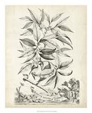 Scenic Botanical IV Giclee Print by Abraham Munting