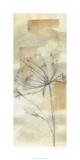 Neutral Lace II Limited Edition by Jennifer Goldberger