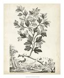 Scenic Botanical V Giclee Print by Abraham Munting