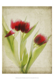 Parchment Flowers I Prints by Judy Stalus