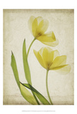 Parchment Flowers IV Posters by Judy Stalus