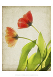 Parchment Flowers VI Posters by Judy Stalus