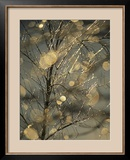 The Frozen Branches of a Small Birch Tree Sparkle in the Sunlight, Waynesboro, Pennsylvania Framed Photographic Print by Raymond Gehman
