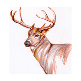 Deer in Pencil Prints by Anne Seay