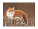 Red Fox Posters by Julie Peterson