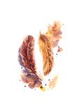 Orange Feathers Poster av Sophia Rodionov