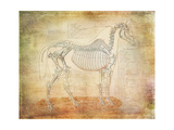 Horse Anatomy 301 Art by Ramona Murdock