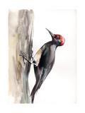 Woodpecker Poster av Sophia Rodionov