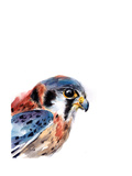 Bird of Prey II Poster av Sophia Rodionov