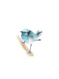 Blue Bird II Posters av Sophia Rodionov