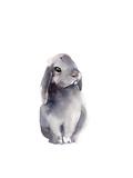 Portrait of a Rabbit IV Plakater av Sophia Rodionov