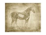 Horse Anatomy 401 Premium Giclee Print by Ramona Murdock