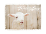 Hello Spring Lamb Prints by Ramona Murdock