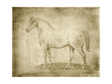 Horse Anatomy 101 Prints by Ramona Murdock