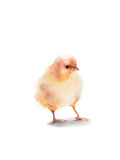 Chick III Posters av Sophia Rodionov
