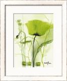 Coquelicot Vert II Art by  Marthe