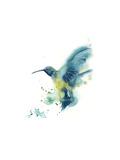 Kolibri Posters av Sophia Rodionov