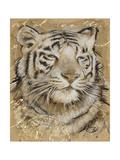 Safari Tiger Prints by Chad Barrett