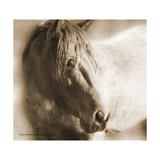 The Mustang Sepia Prints by Kari Brooks