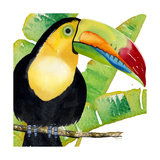 Tropical Toucan Prints by Mary Escobedo