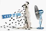 Keep it Cool Photo