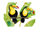 Tropcial Toucan Pair Art by Mary Escobedo