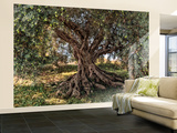 Olive Tree Wallpaper Mural