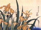 Convolvulus and Tree Frog Posters by Hokusai Hokusai