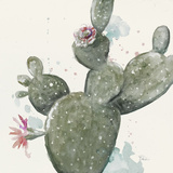 Natural Cactus in Bloom Poster by Patricia Pinto
