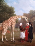Nubian Giraffe, 1827 Art by Jacques-Laurent Agasse