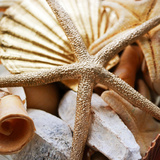 Gold Starfish II Prints by Susan Bryant